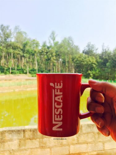 nestle-cup-the-jeromy-diaries-lifestyle-blogger-at-kushalnagar-coorg-nestle-coffee-demo-farm